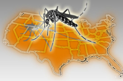 Unwanted in the U.S. – The Asian Tiger Mosquito